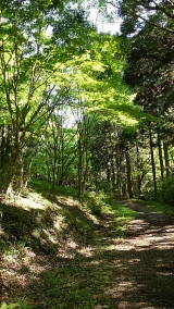 20160514旧東海道原生の森092