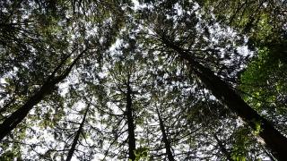 20160514旧東海道原生の森094