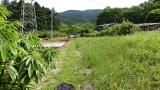 20160514旧東海道原生の森123