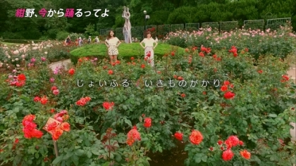 160623紺野、今から踊るってよ 紺野あさ美 (7)