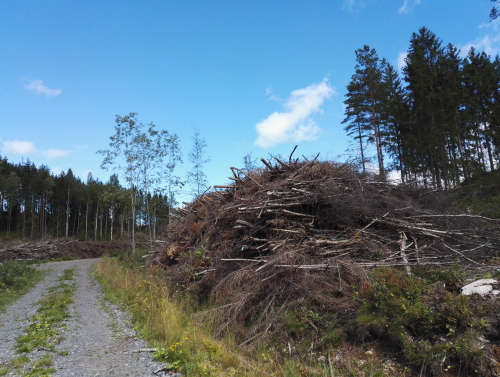 フィンランド ブルーベリー狩り