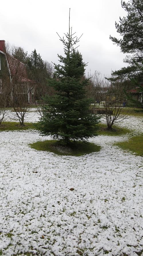 雪 フィンランド南部 4月