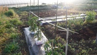 2016.4.30菜園2