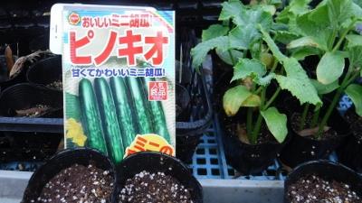 2016.5.4菜園