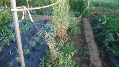 2016.5.22菜園6