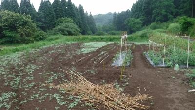 2016.5.29菜園11