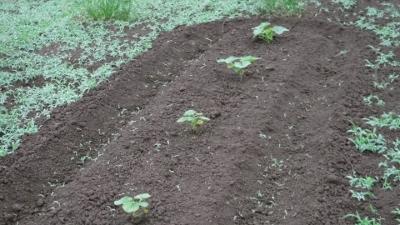 2016.5.29菜園18