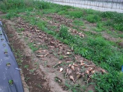2016.6.1菜園4