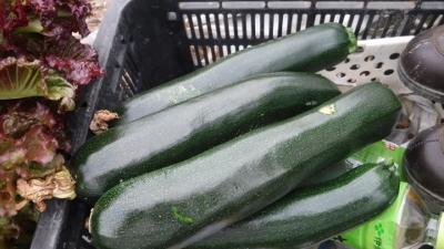 2016.6.3菜園6