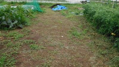 2016.6.19菜園2