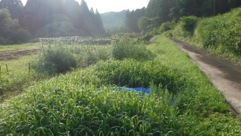 2016.7.2菜園2