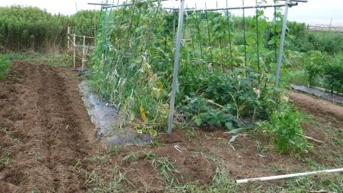 2016.7.16菜園21