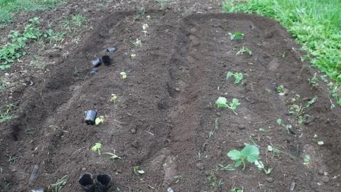 2016.7.25菜園