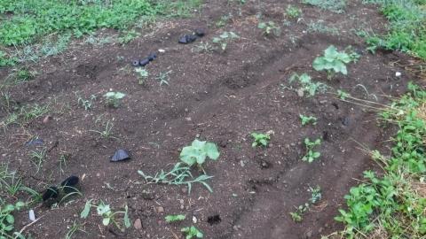 2016.8.5菜園