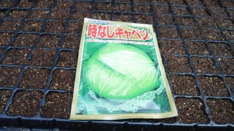 2016.8.20菜園5