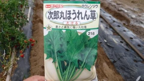 2016.9.3菜園10