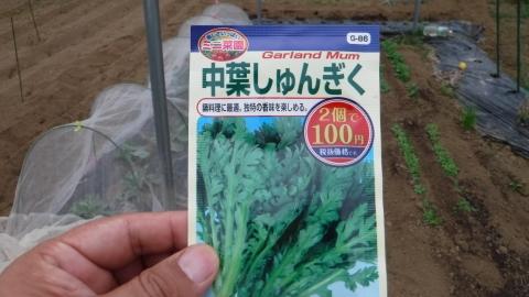 2016.9.10菜園14