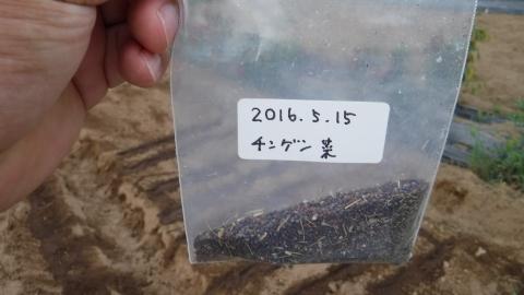 2016.9.10菜園23