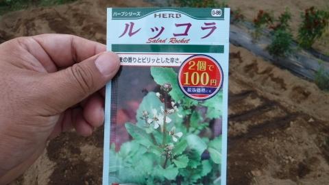 2016.9.10菜園24