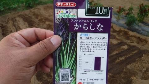 2016.9.10菜園25