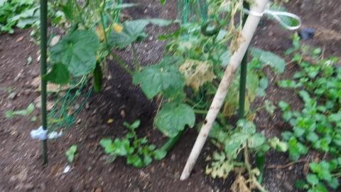 2016.9.13菜園6