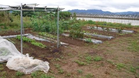 2016.9.20菜園5