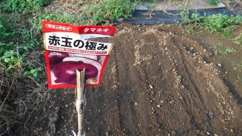 2016.9.24菜園4