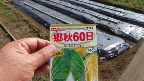 2016.9.24菜園22