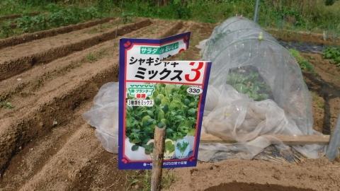 2016.9.24菜園24