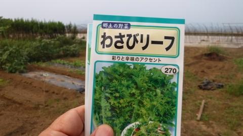 2016.9.24菜園30