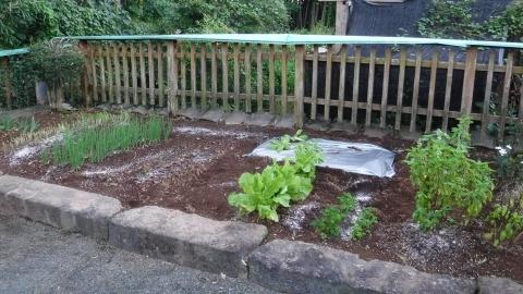 2016.10.10菜園