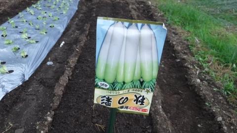 2016.10.11菜園3