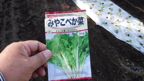 2016.10.11菜園8