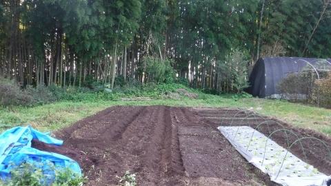 2016.10.15菜園6