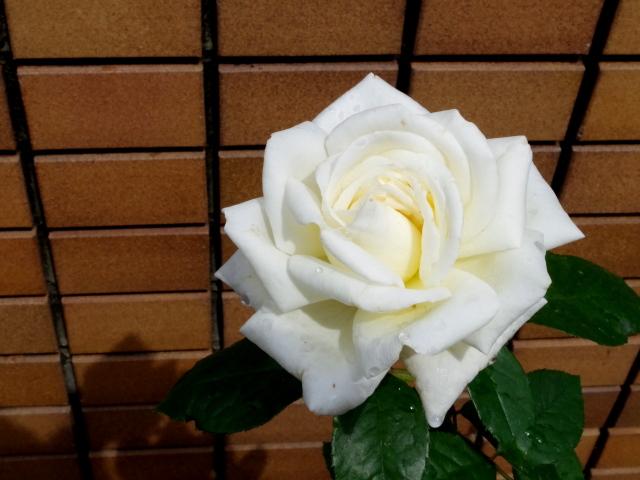 2015-01-0420160620_03k.jpg