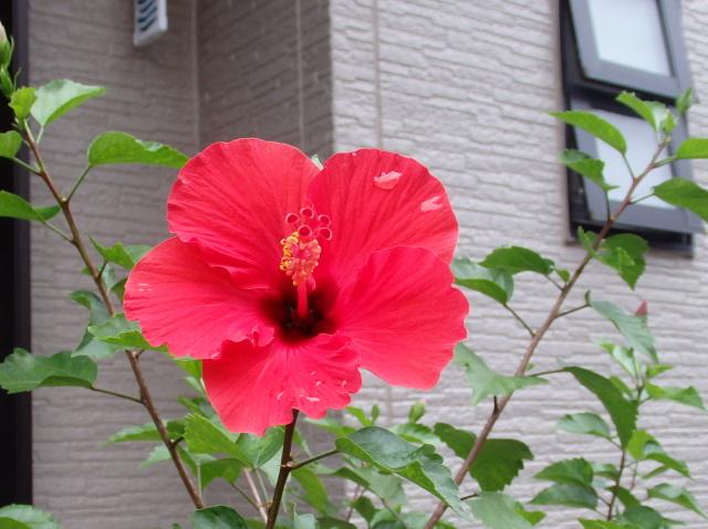 2015-01-0420161001_09.jpg