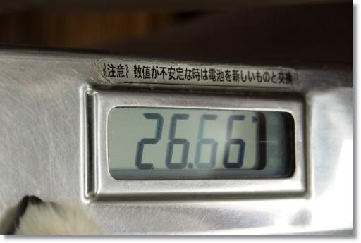 NENE9372.jpg