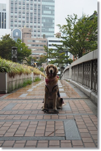 NENE9462.jpg