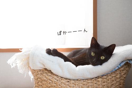 5G97A4646.jpg