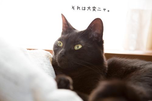 5G97A4678.jpg