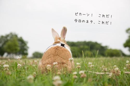 5G97A4843.jpg