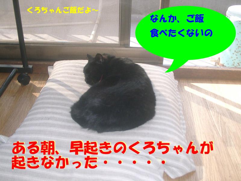 くろちゃん異変2