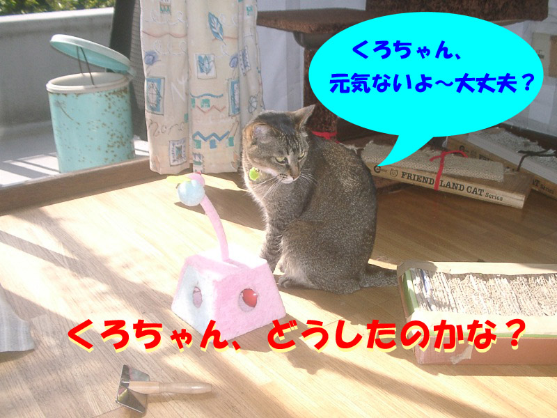 くろちゃん異変3