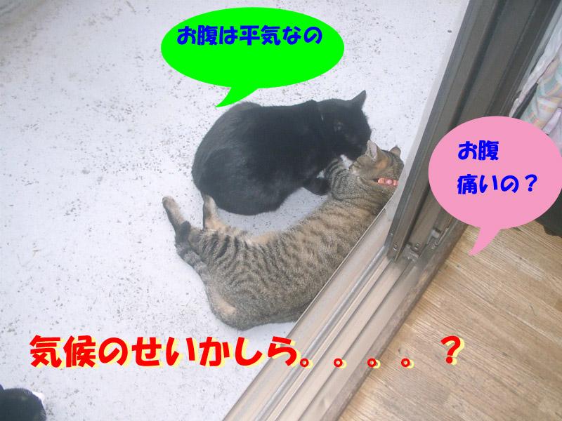 くろちゃん異変4