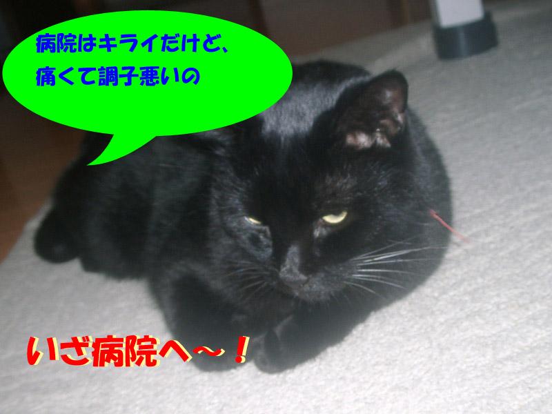 くろちゃん異変5-1