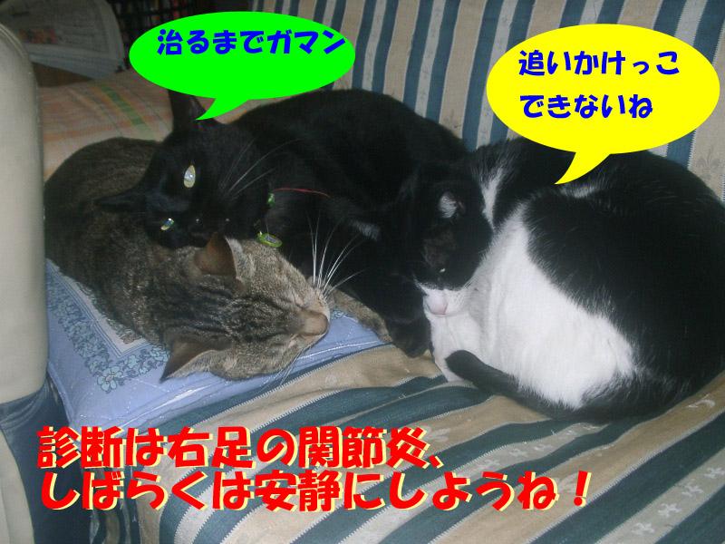 くろちゃん異変6