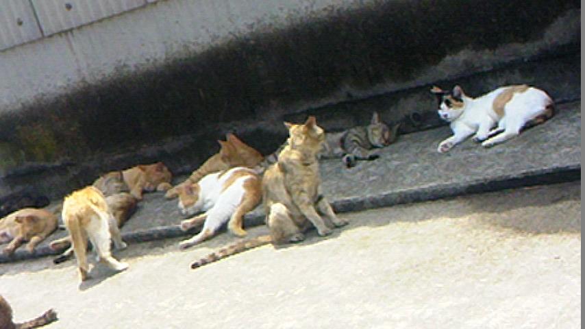 男木島漁協近くの猫