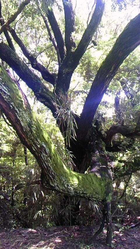 加茂神社の木