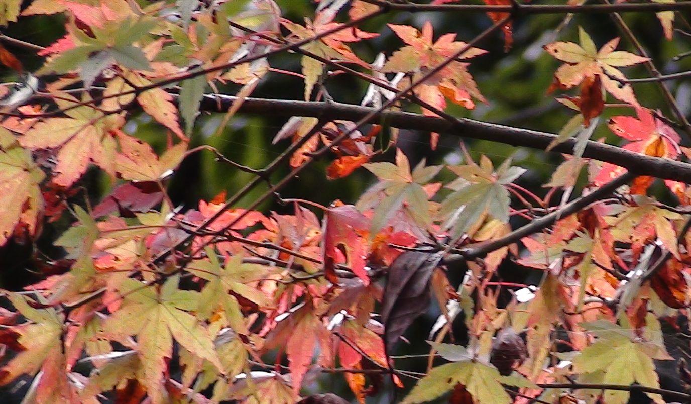 白水の滝 紅葉