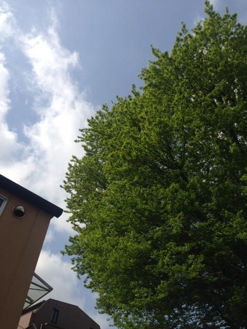 芽吹き(2016-4-26) 縦